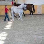 superpferd-20120909-153
