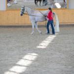 superpferd-20120909-166