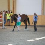 superpferd-20120909-173