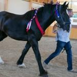 superpferd-20120909-229