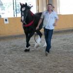 superpferd-20120909-241