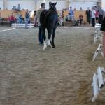 superpferd-20120909-250