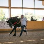 superpferd-20120909-251