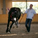 superpferd-20120909-253