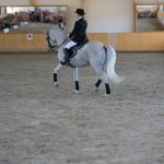 superpferd-20120909-280