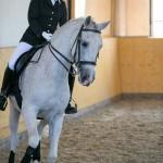 superpferd-20120909-293