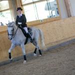 superpferd-20120909-299