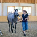 superpferd-20120909-544